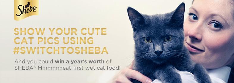 Sheba_Blogger_Bug (4)