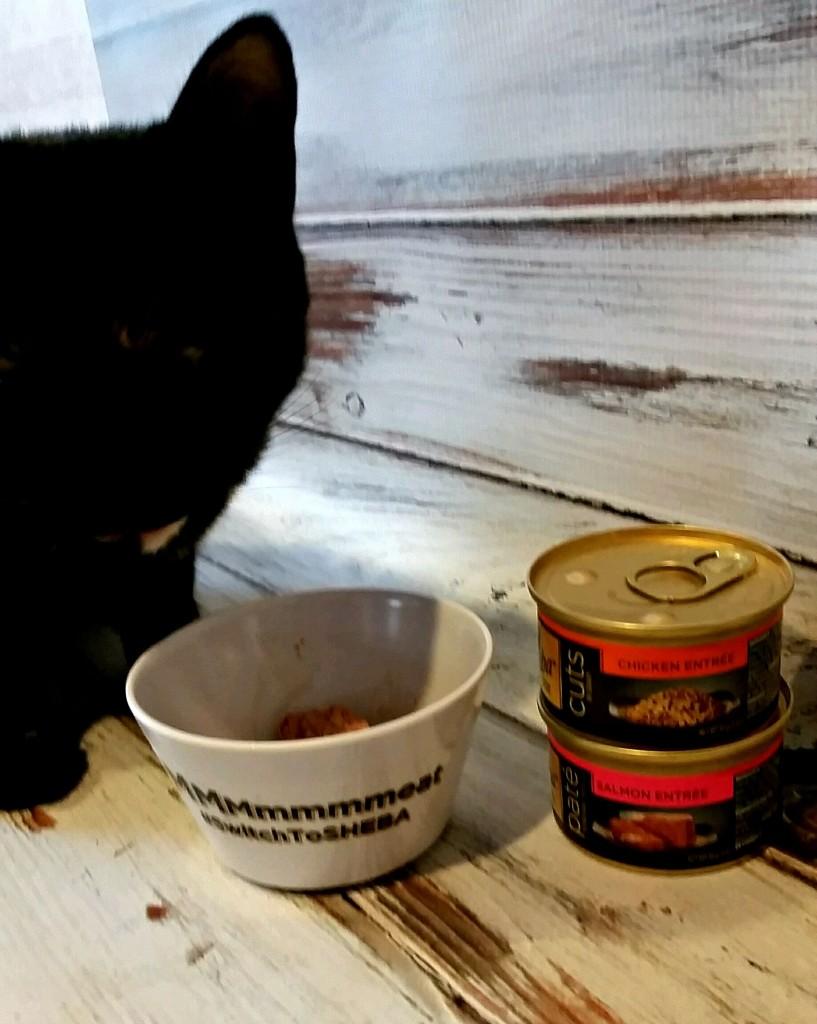 sheba_cat_food2