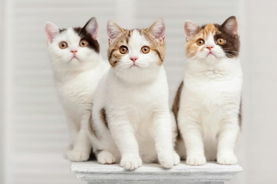 idexx_cats